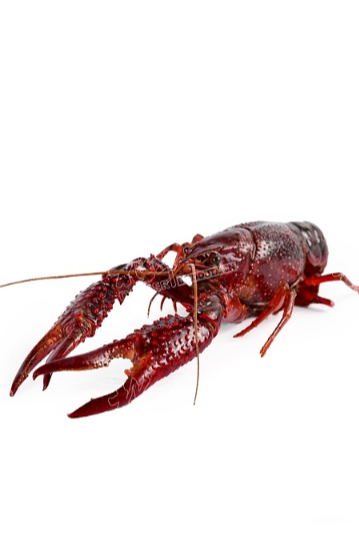 海鲜 龙虾 生鲜白底拍摄 京东白底主图